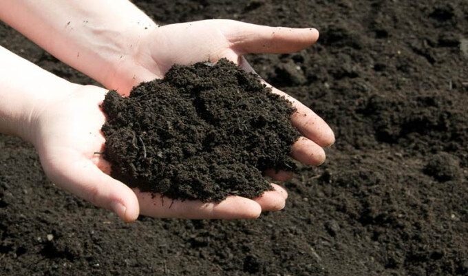 _____ Grows in the Soil of ______